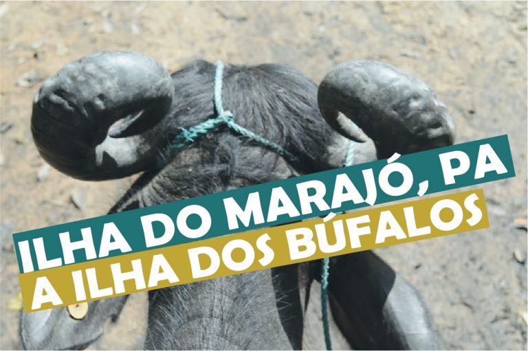 Read more about the article Ilha do Marajó no Pará a ilha dos búfalos