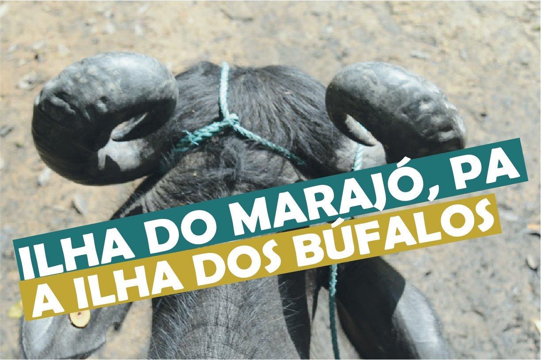 You are currently viewing Ilha do Marajó no Pará a ilha dos búfalos