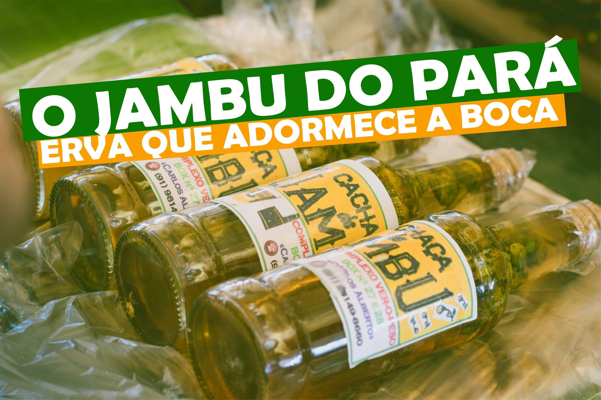 Read more about the article O Jambu no Pará, a erva que adormece a boca