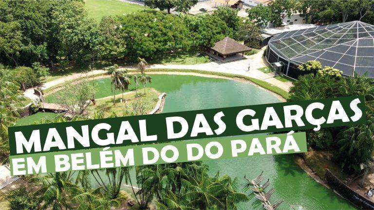 Read more about the article Mangal das Garças em Belém do Pará