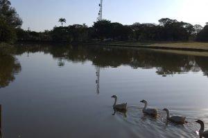 laguinho holambra